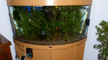vends aquarium juwel 350l triangle
