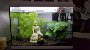 Vends aquarium 15l