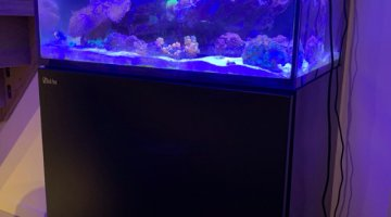 aquarium eau de mer Red Sea REEFER 170 litres