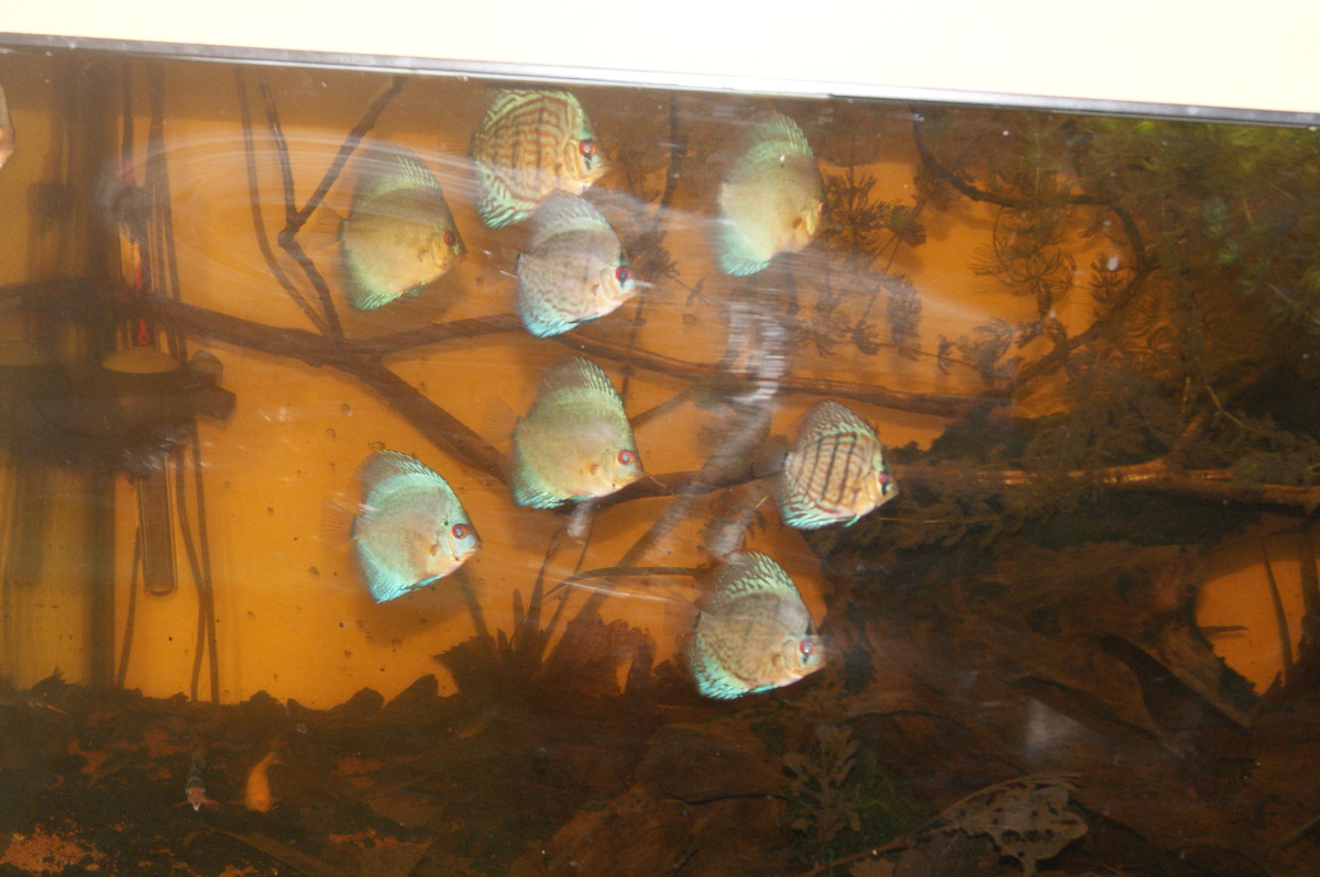 Discus lowtech