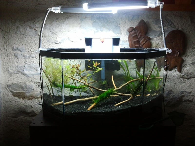Installation de l'aquarium de 50l